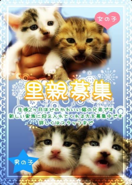 横浜 猫 里親 里親募集中の猫たち